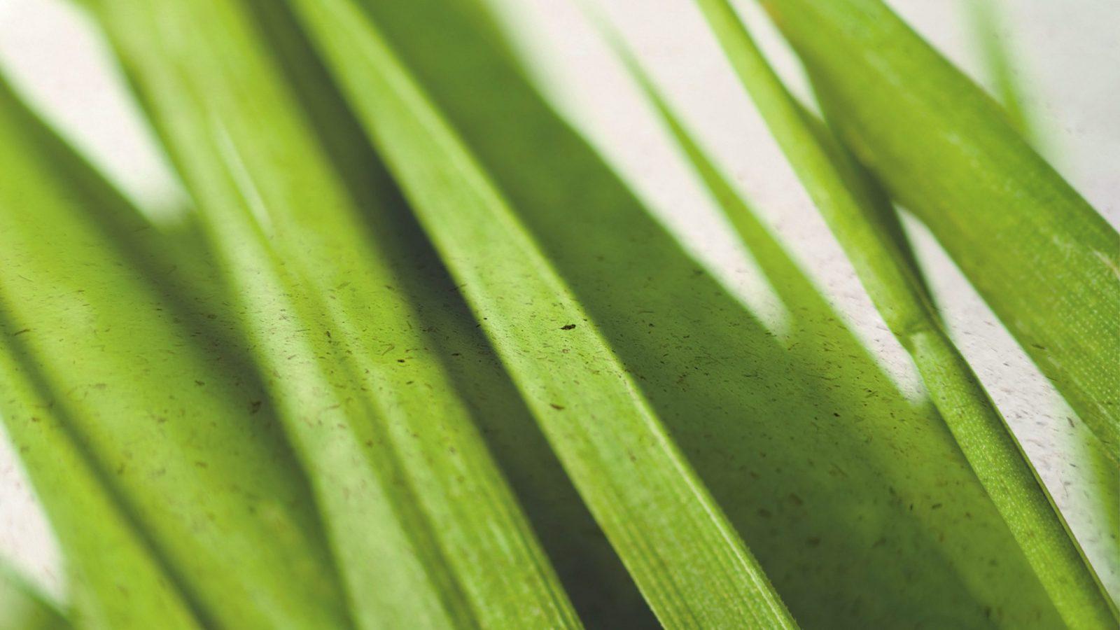 Das GrasPapier.